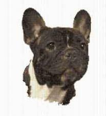 Borduurpakket : Franse Bulldog