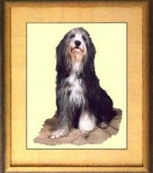 Borduurpakket : Bearded Collie