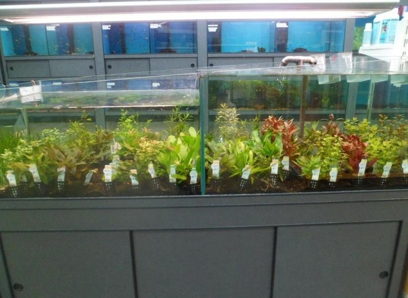 Aquarium planten 4 voor €12,50
