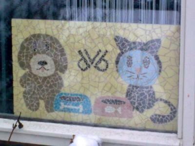Dierenvoedselbank Den Helder schreeuwt om kattenvoer!!!!!
