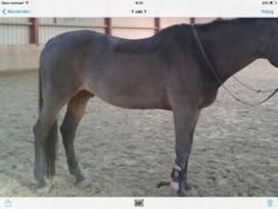 Scheren paard/ pony