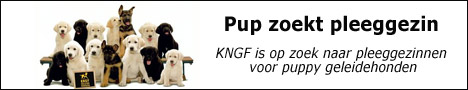 http://www.geleidehond.nl/