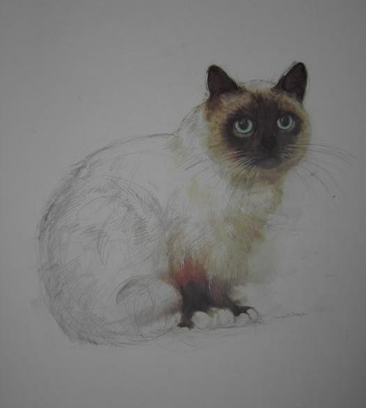 studie van katten 4 prints van katten